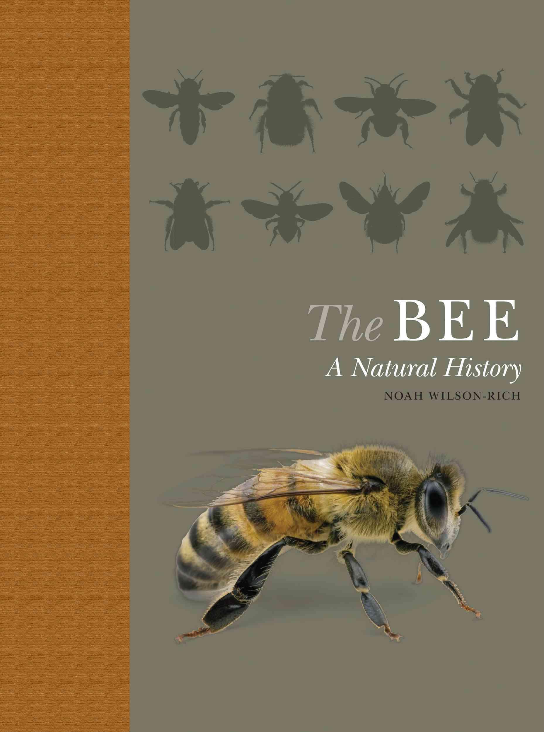 The Bee By Wilson-rich, Noah/ Allin, Kelly (CON)/ Carreck, Norman (CON)/ Quigley, Andrea (CON)